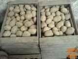 Krompir, Krka, bel