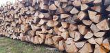 bukova drva suha