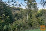 Videm Zgornji Leskovec 3405 m2